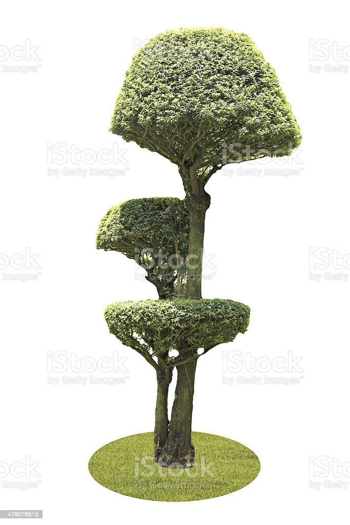 Tree trimming on a white background. royalty-free stock photo