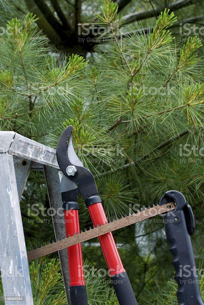 Árvore recorte de ferramentas foto royalty-free