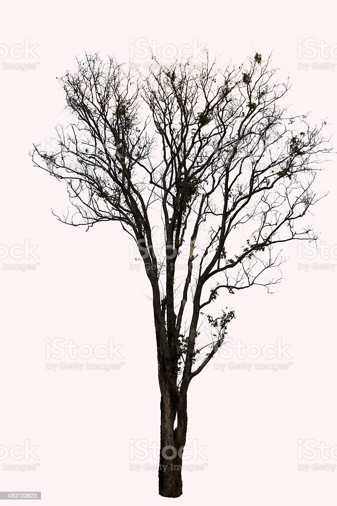 Tree tropical royalty-free stock photo