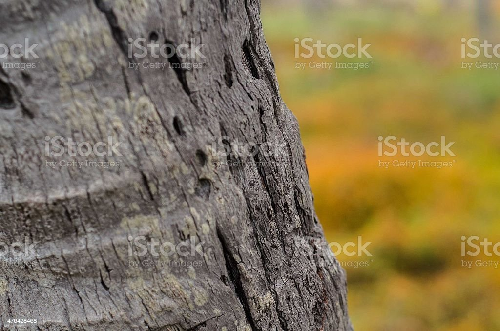 tree trunk and bark close up stock photo