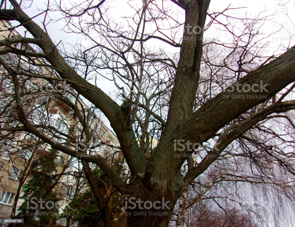 845- Tree trunk and branch,close up stock photo