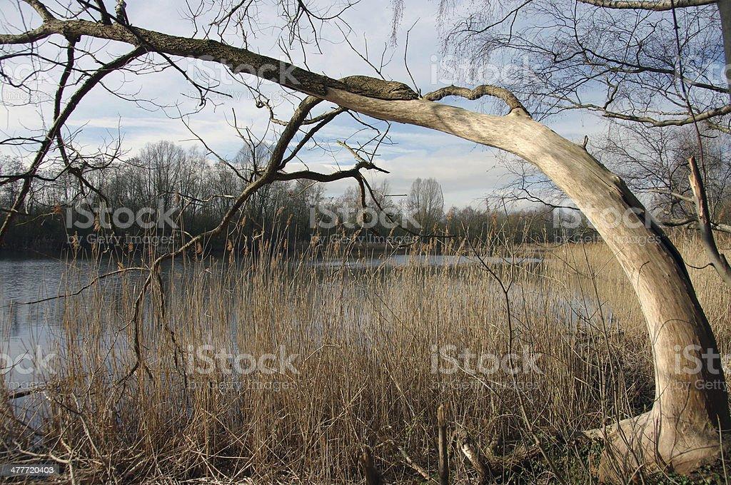 Tree trunk at a lake stock photo