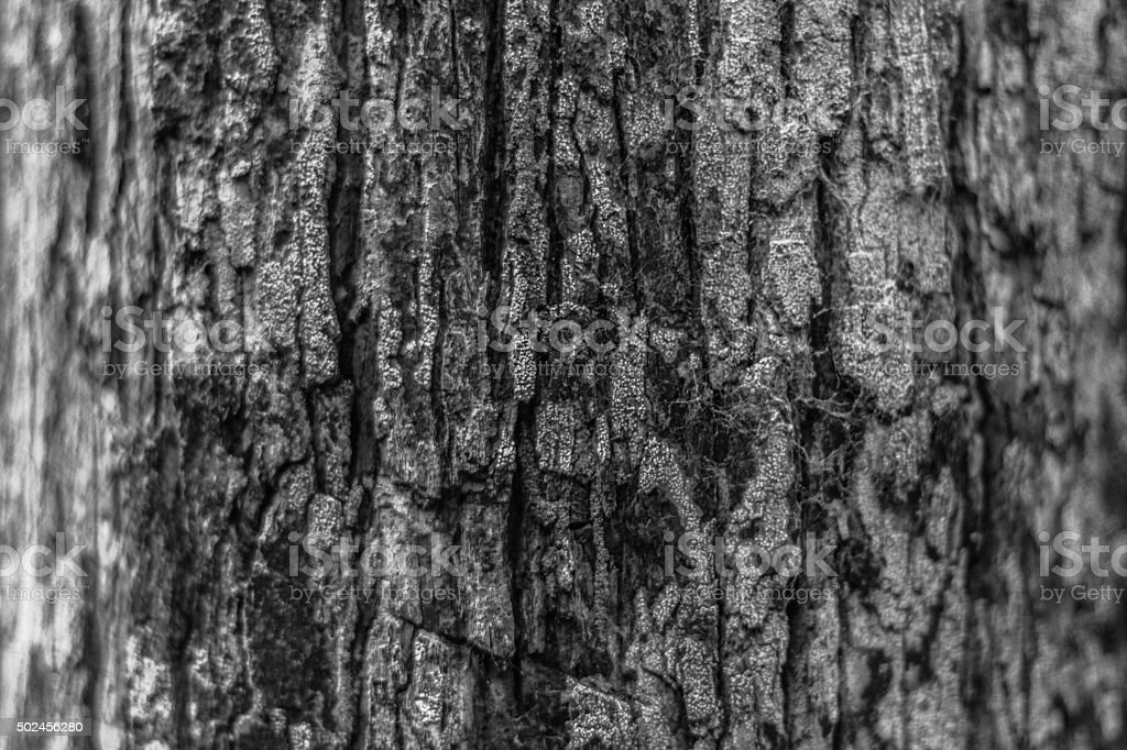 Tree trunk at Amazon Forest stock photo
