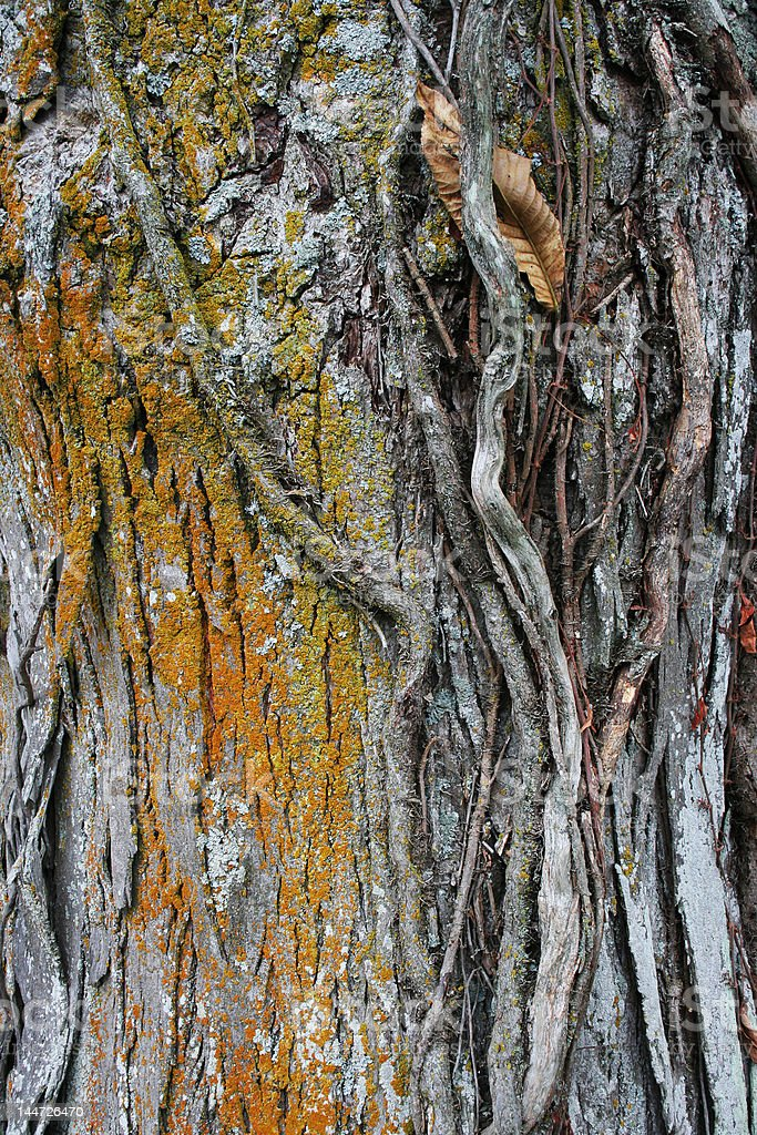 Tree trunk background royalty-free stock photo