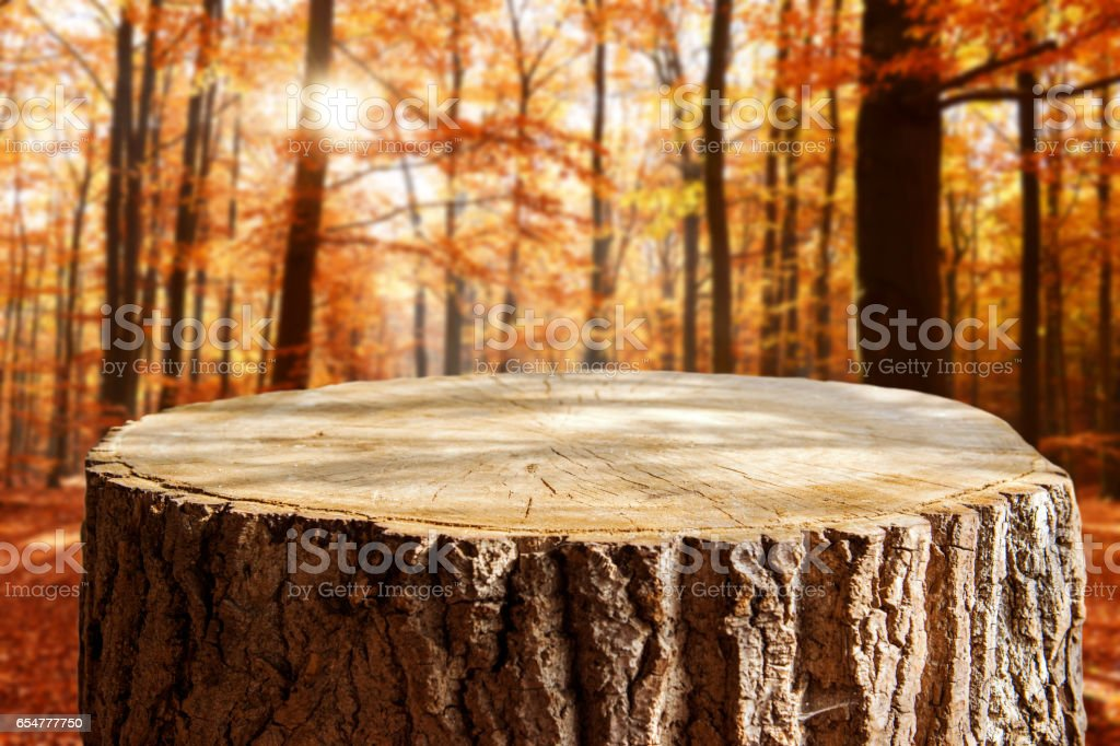 Tree trunk background stock photo