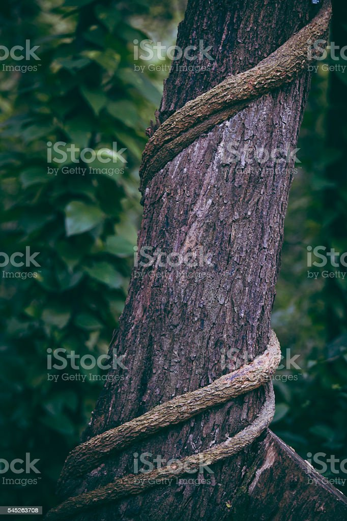 Tree trunk binded stock photo