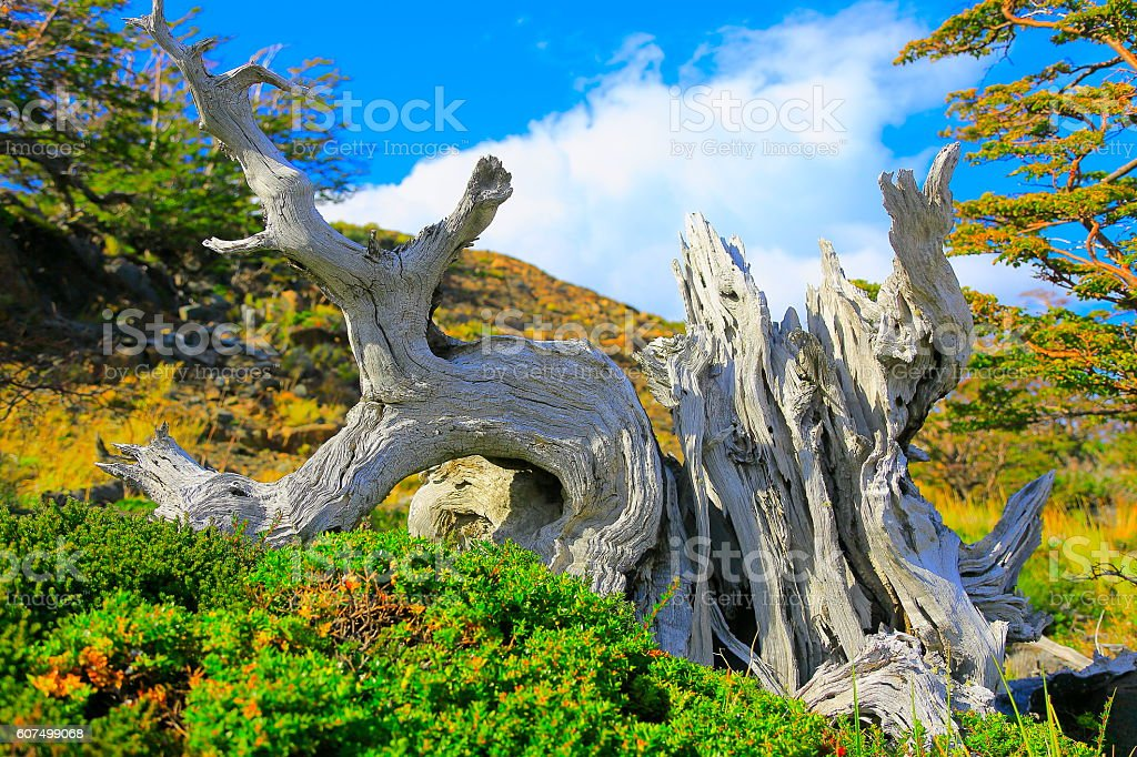 Tree trunk, Chilean Patagonia steppe landscape, Torres Del Paine stock photo