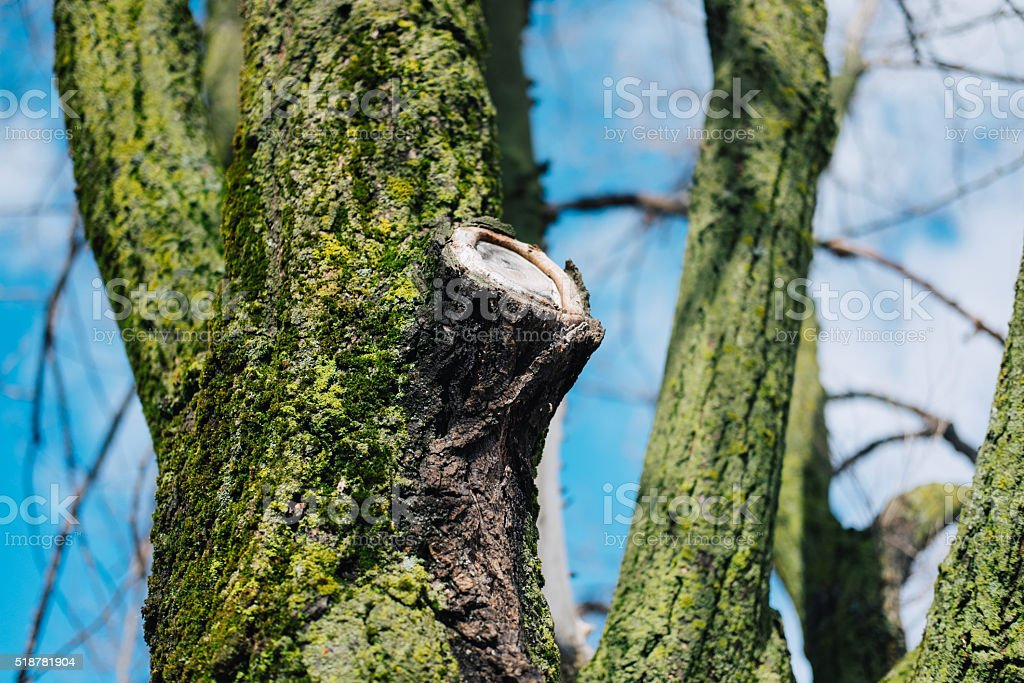 Tree trunk covered with moss in spring stock photo