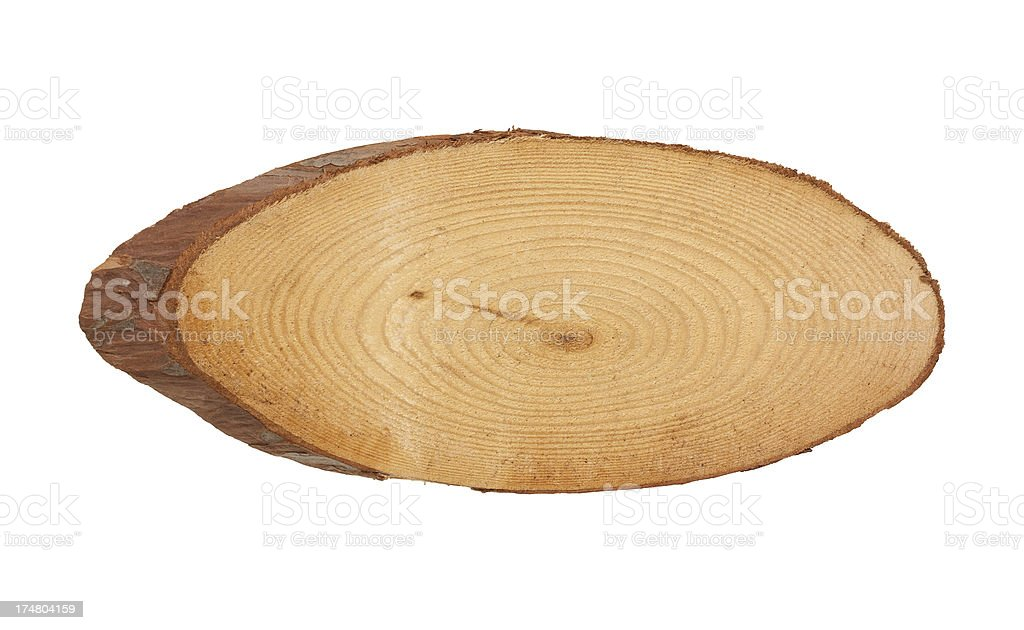 Tree Trunk Cross Section isolated on white background stock photo