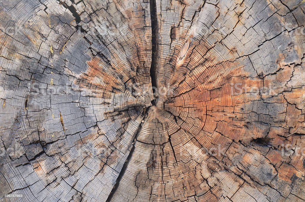 tree trunk cross section stock photo