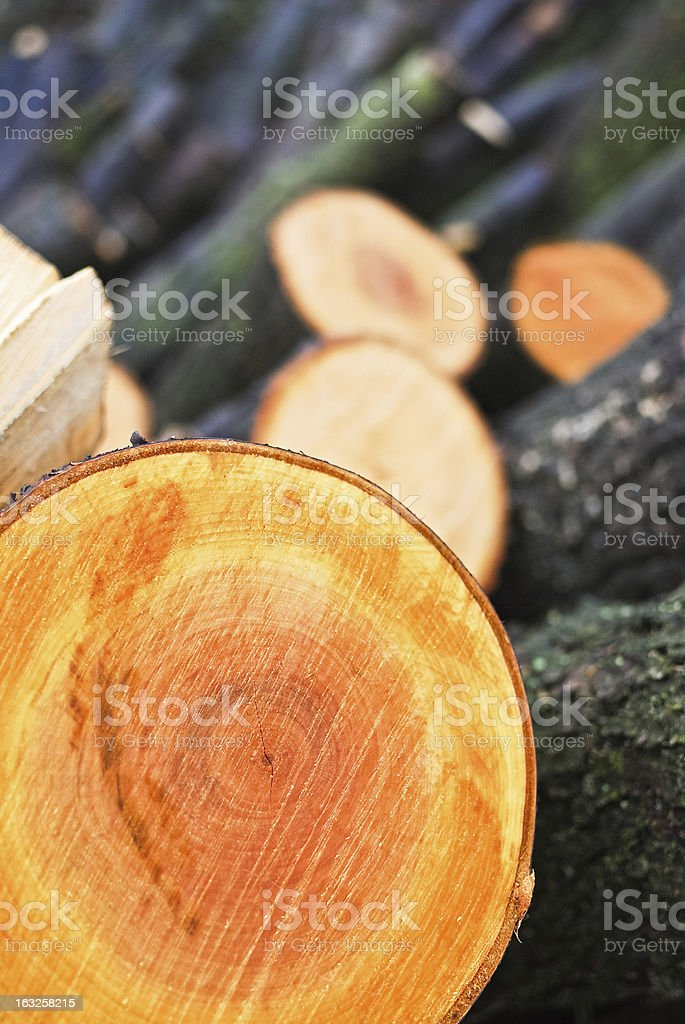 Tree trunk cut in pieces stock photo