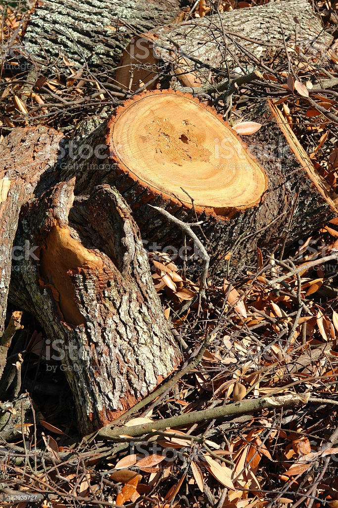 Tree Trunk & Cut Wood royalty-free stock photo