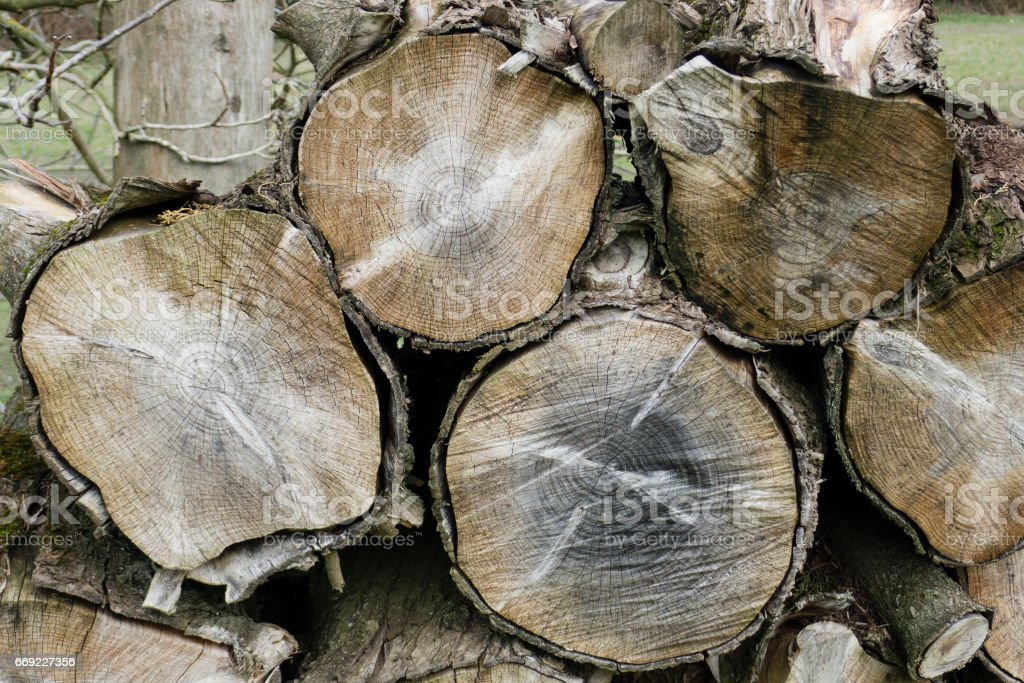 Tree trunk cuts showing growth rings stock photo