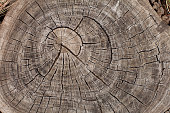 Tree trunk growth rings