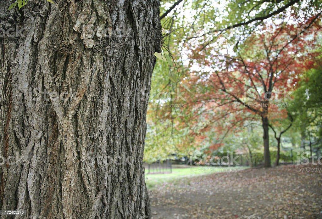Tree Trunk In Autumn royalty-free stock photo