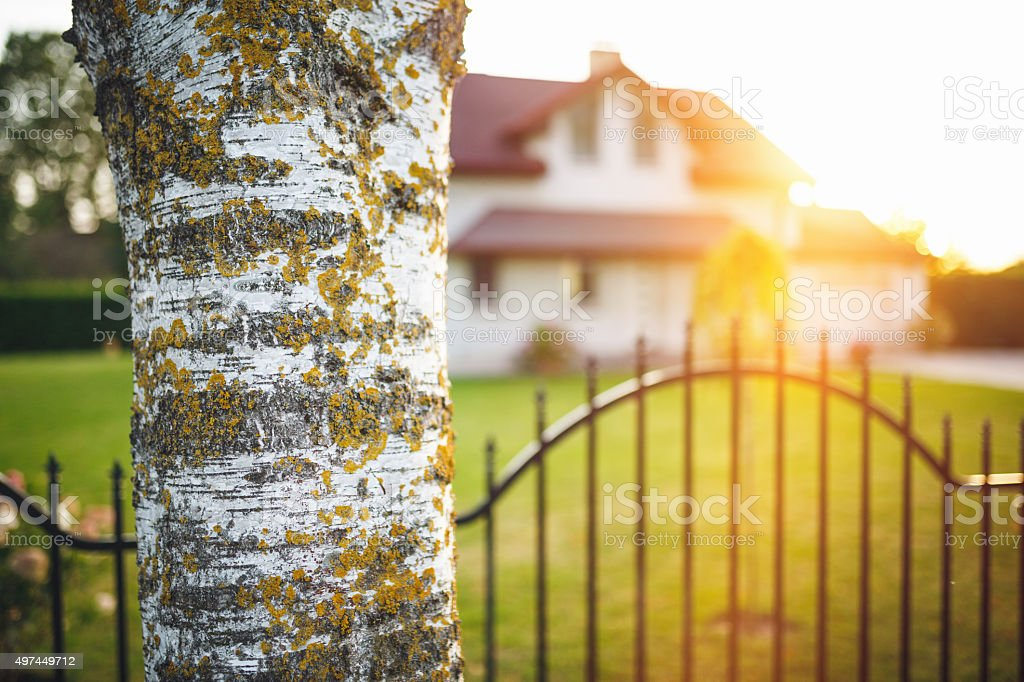 Tree trunk in front of the house stock photo
