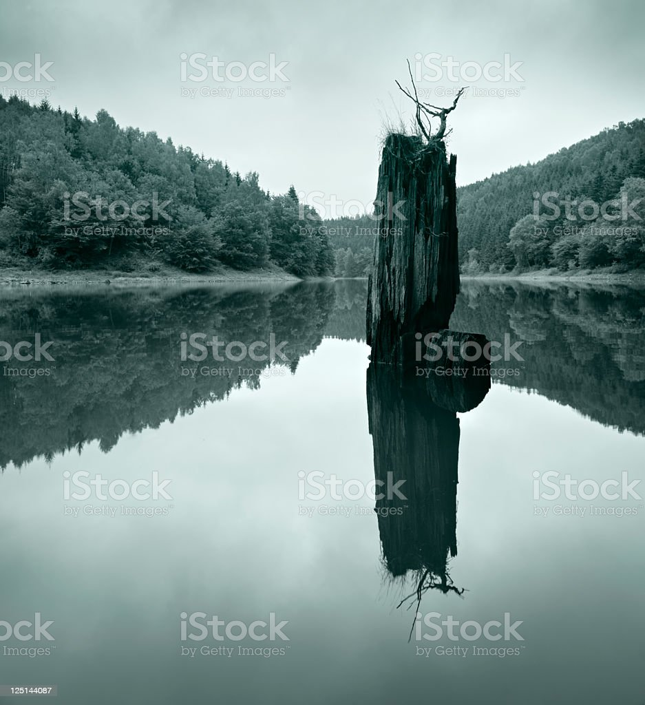 Tree Trunk in Remote Lake amongst the Woods royalty-free stock photo