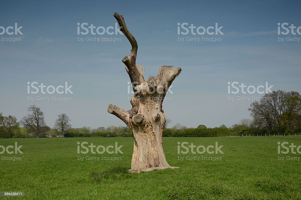Tree trunk in spring sunshine stock photo