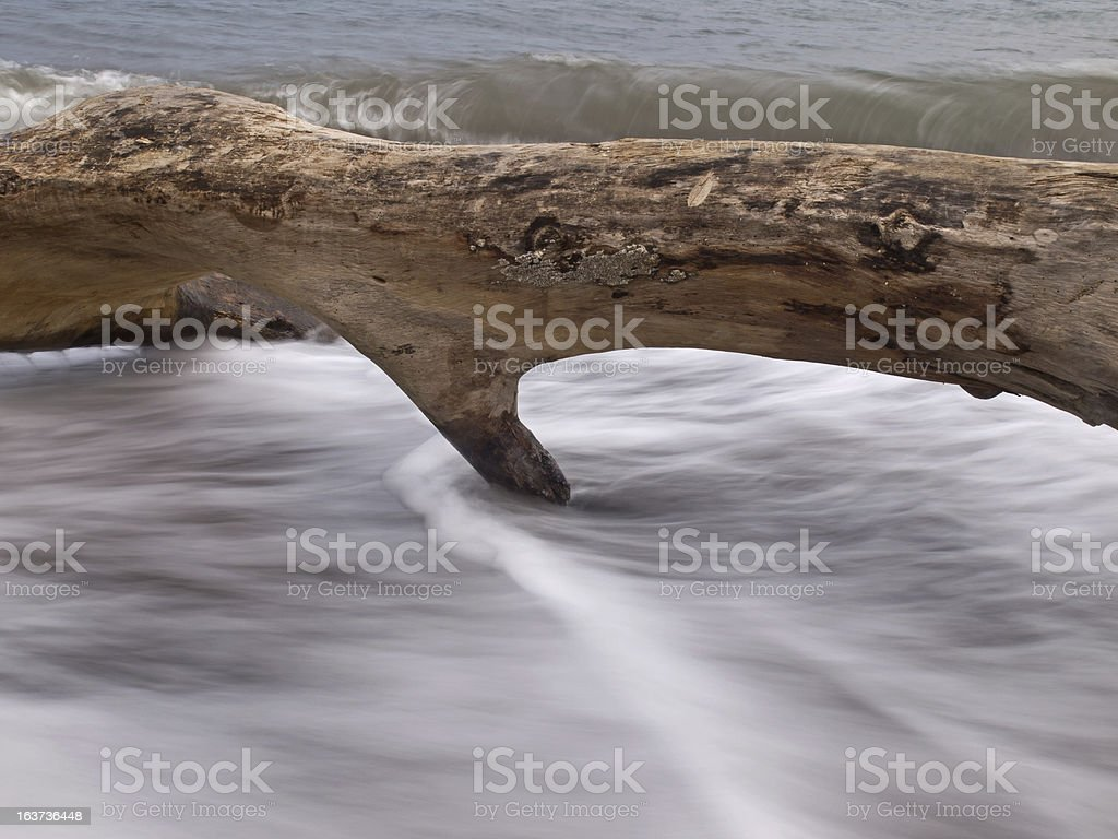 Tree trunk in the surf royalty-free stock photo