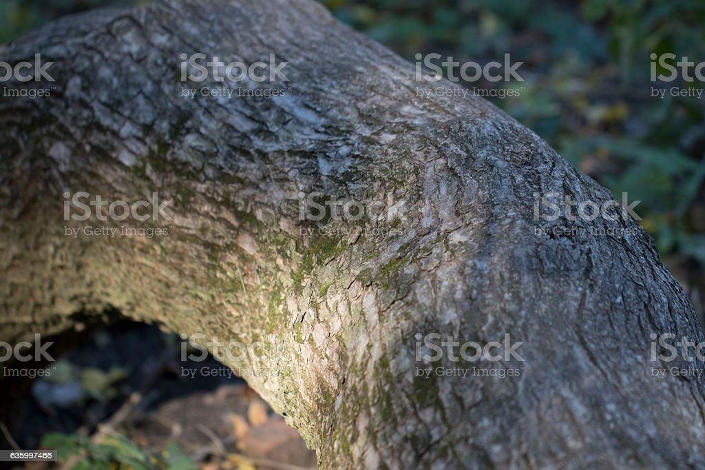 Tree trunk in the woods stock photo