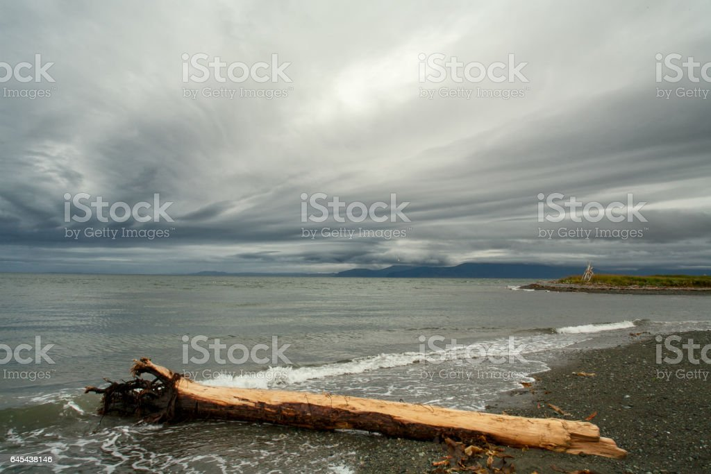 Tree trunk lying on the beach. stock photo