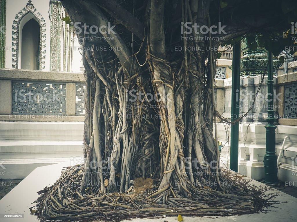 Tree Trunk, Phra Thinang Amarin Winichai, Grand Palace, Bangkok, Thailand stock photo