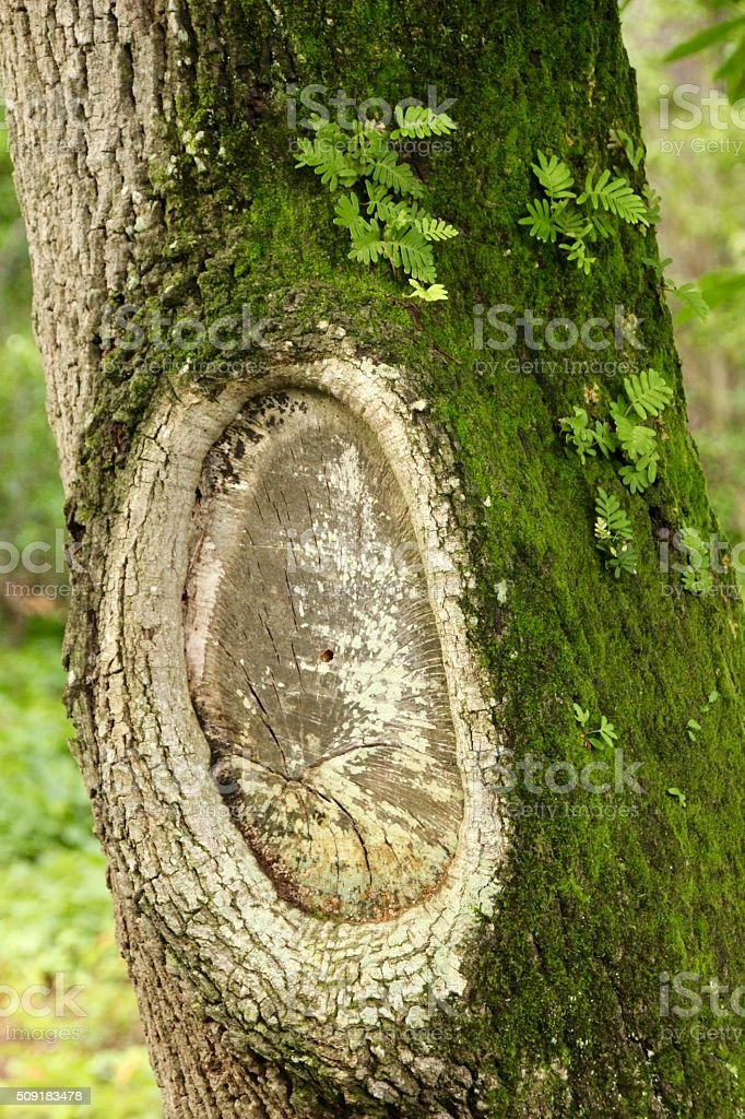 Tree Trunk ! royalty-free stock photo