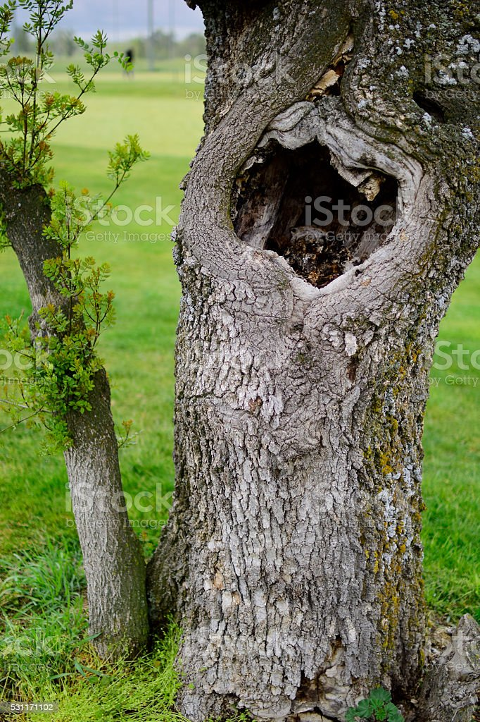 Tree trunk / Tronco de arbol stock photo