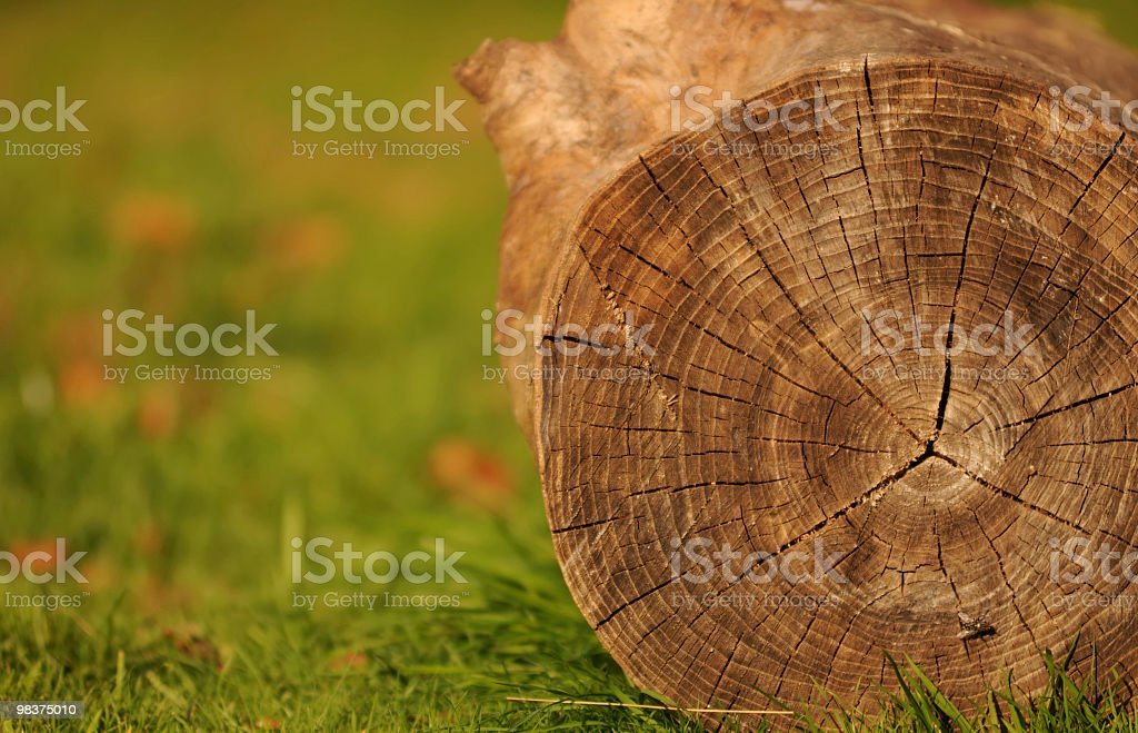 Tree Trunk royalty-free stock photo