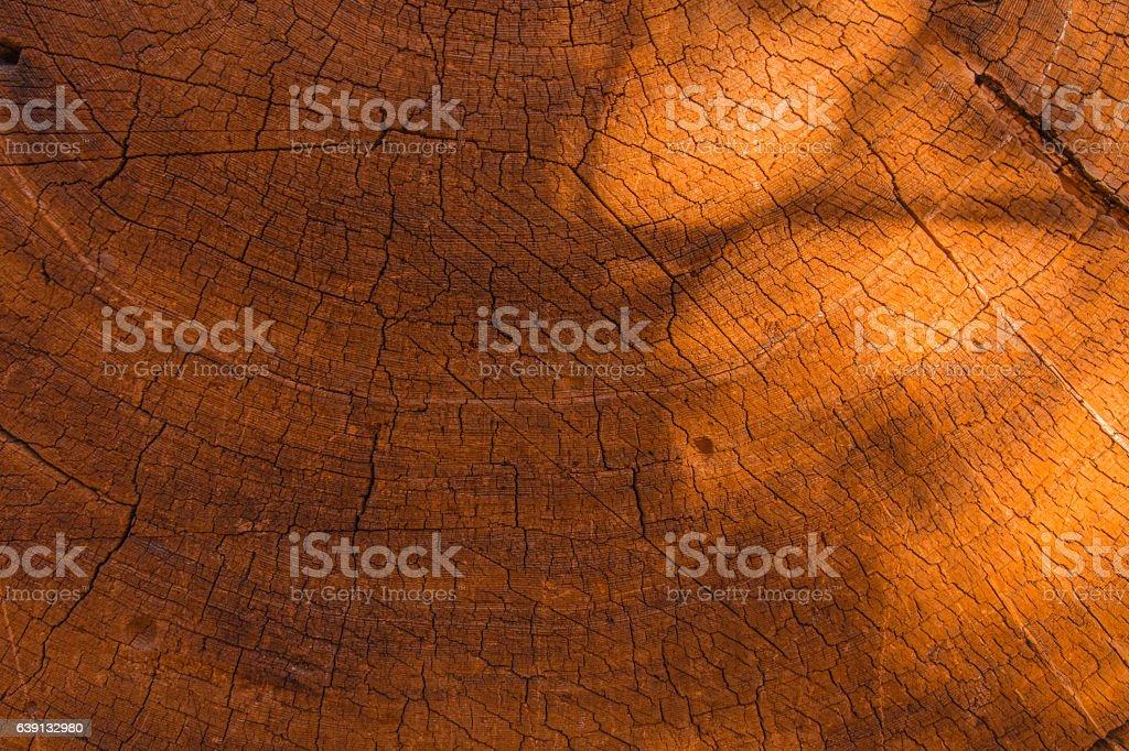 Tree trunk rings stock photo