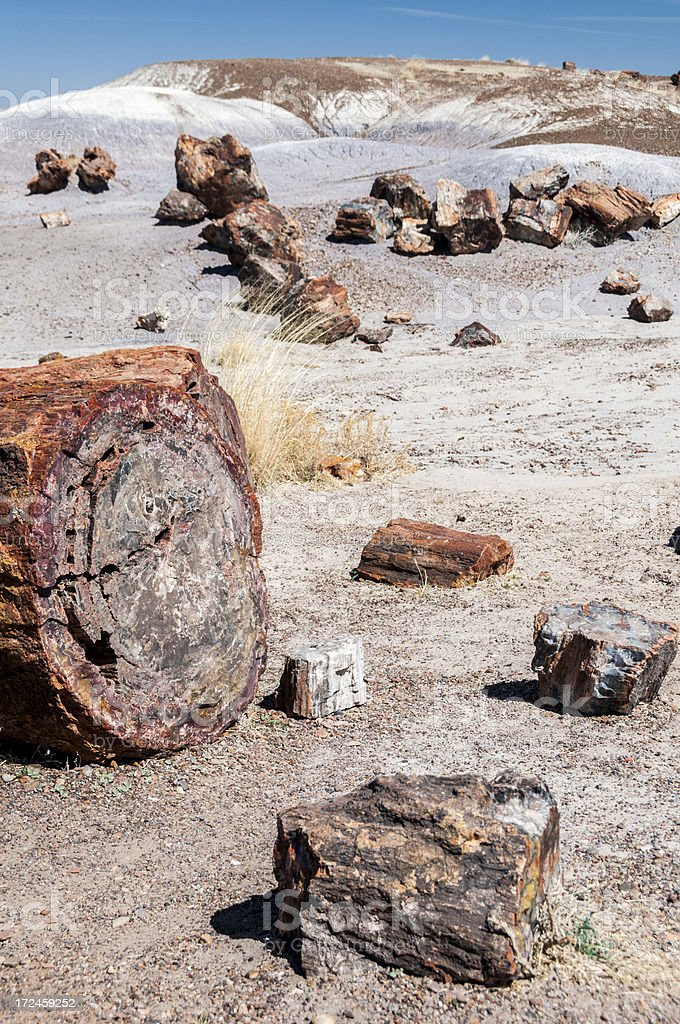 Tree Trunk Sections in Petrified Forest National Park royalty-free stock photo