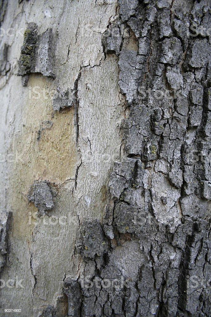 Tree Trunk with Bark Texture stock photo