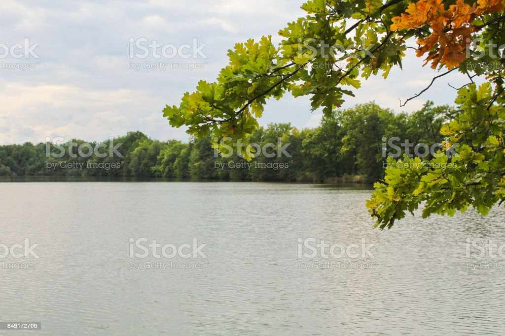 Tree trunk with brown fall leaves with pond, Czech landscape stock photo
