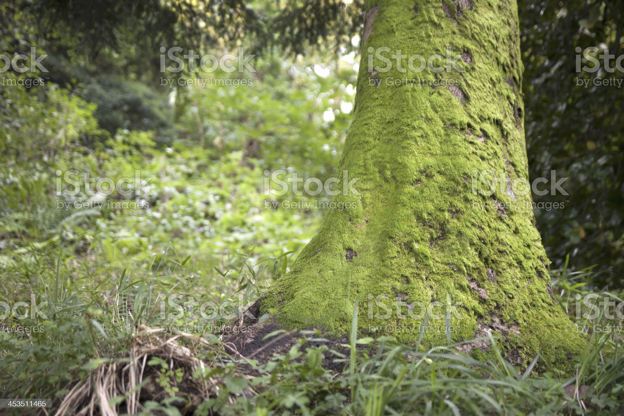 Tree trunk with moss royalty-free stock photo