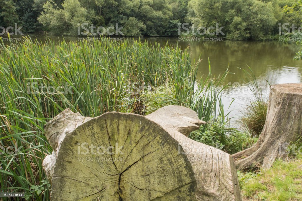 Tree trunks by a lake in the Kent countryside stock photo