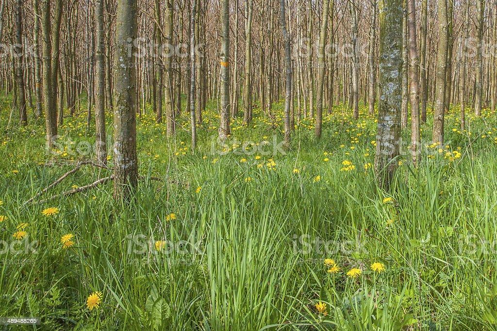 Árbol trunks de vegetación foto de stock libre de derechos