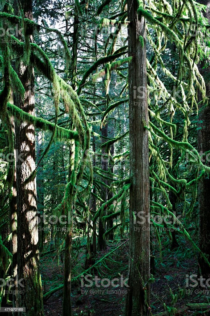 Tree trunks in the forest royalty-free stock photo