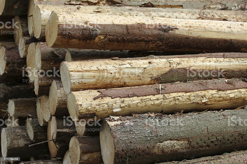 Tree trunks stock photo