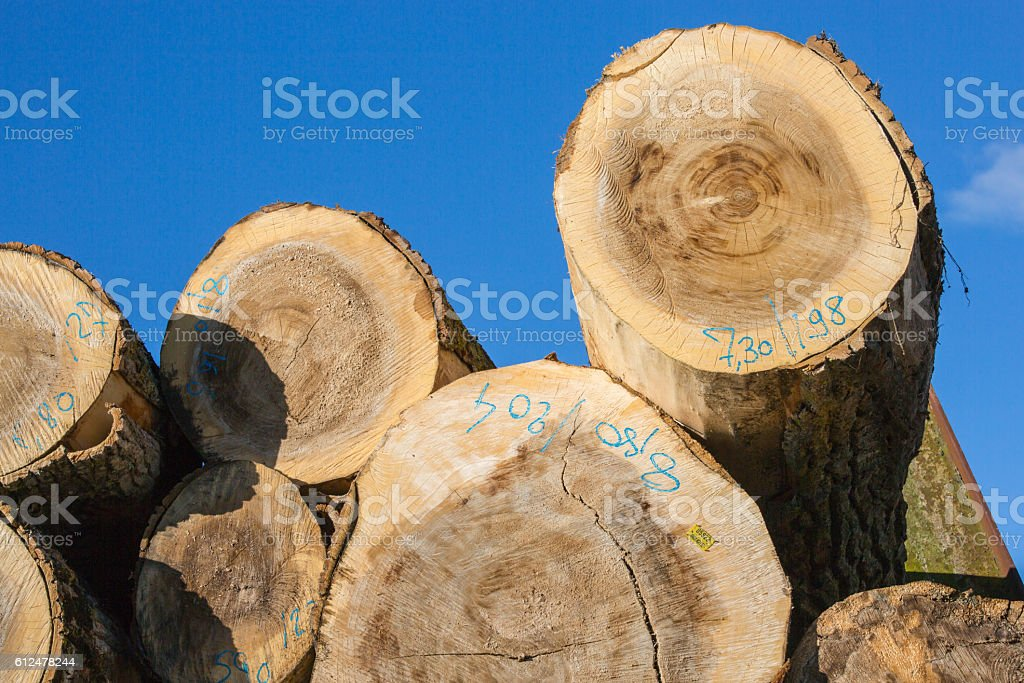 tree trunks stacked before transformation stock photo