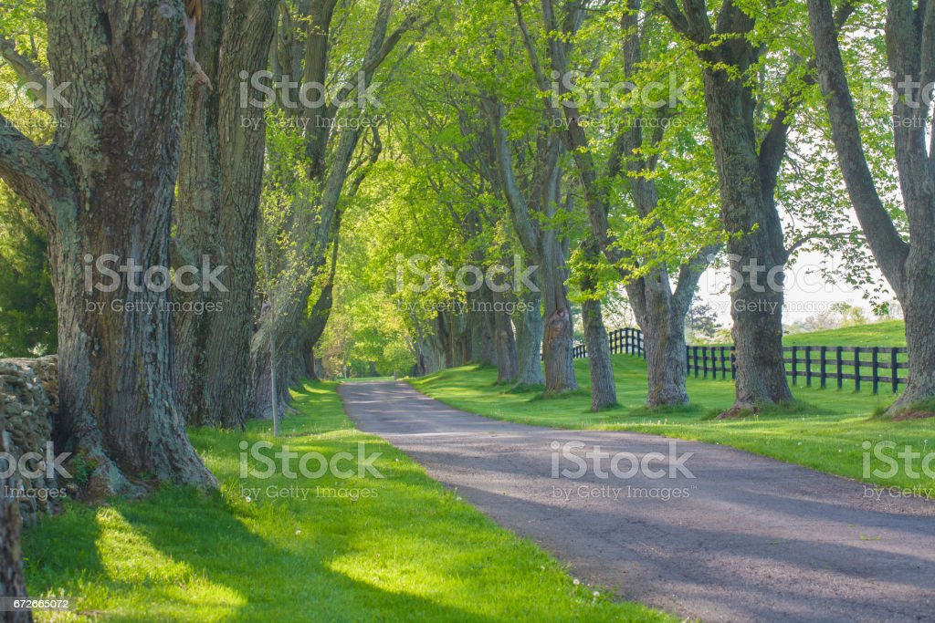 Tree tunnel in springtime stock photo