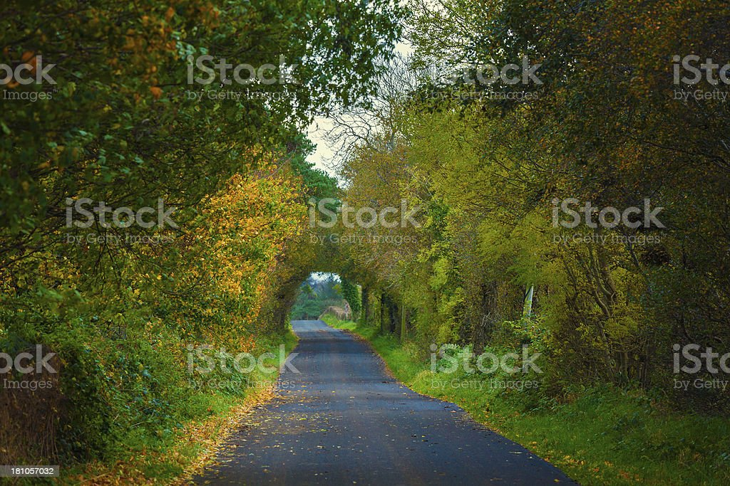 tree tunnel in the autumn royalty-free stock photo