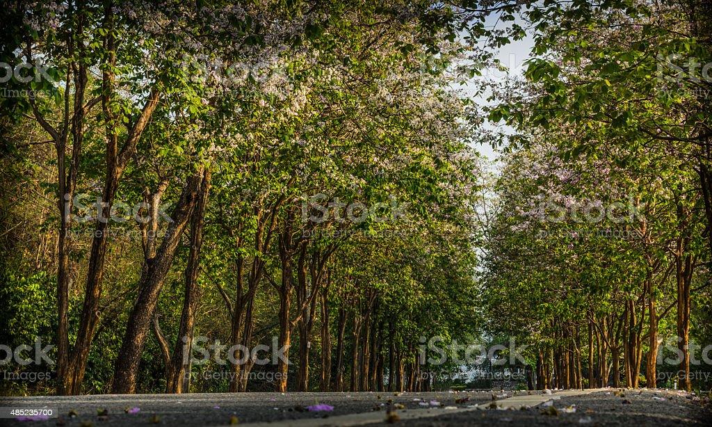 Drzewo Tunel zbiór zdjęć royalty-free