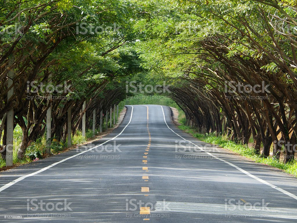 Tree Tunnel Road stock photo
