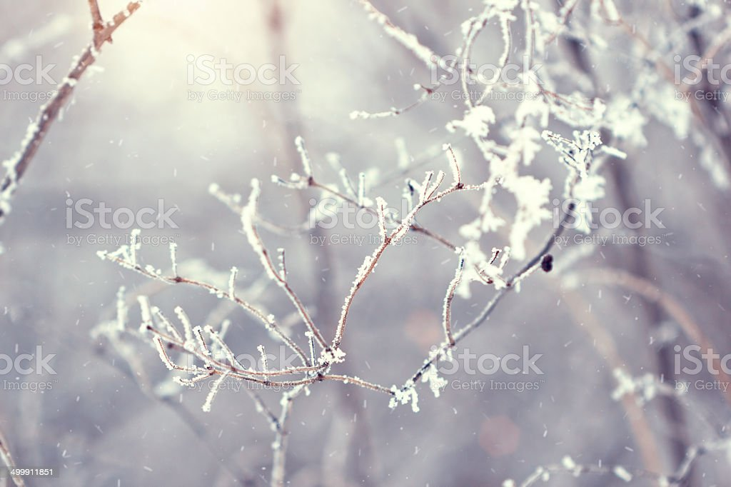 tree twigs covered with frost in winter stock photo