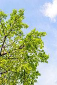 tree under a blue sky