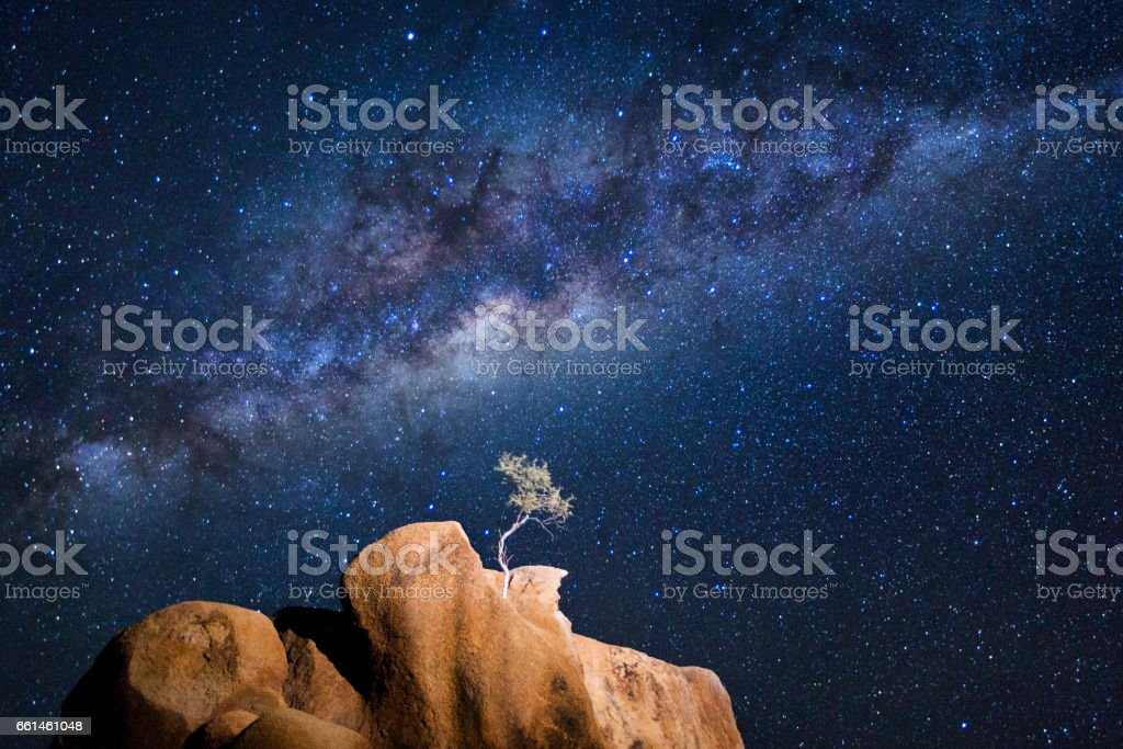 Tree under the Milky Way stock photo