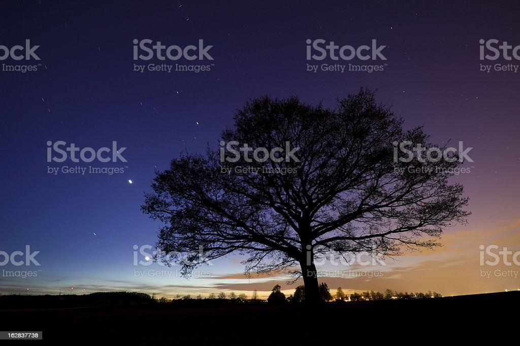Tree under the night sky royalty-free stock photo