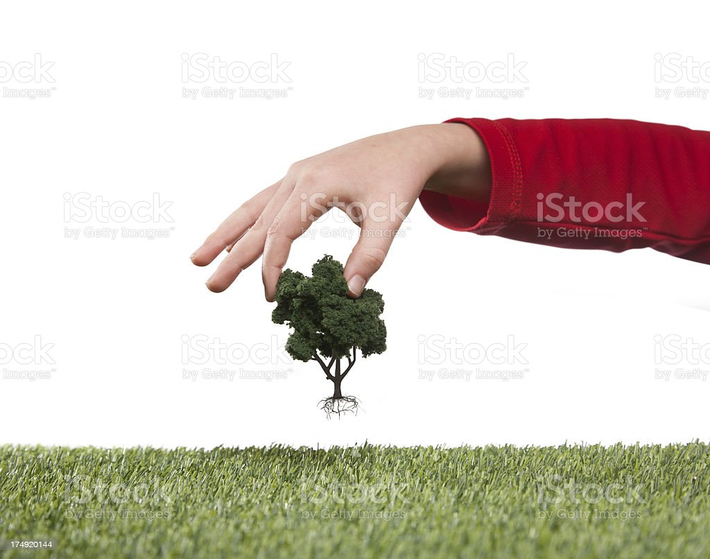 Tree uprooted stock photo