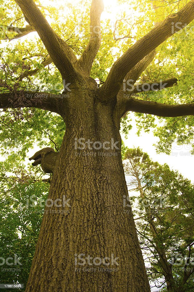 Tree Upward View stock photo