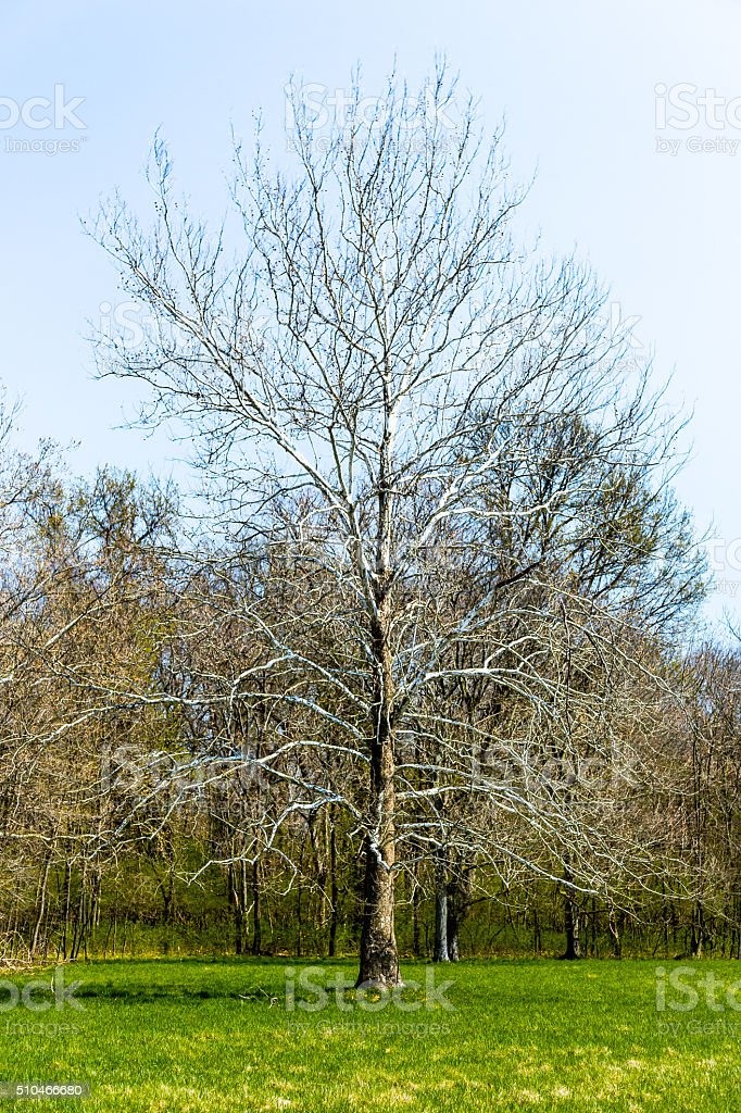 Tree Waking Up stock photo
